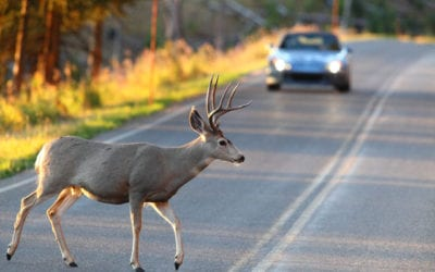 Tis' Deer Season!